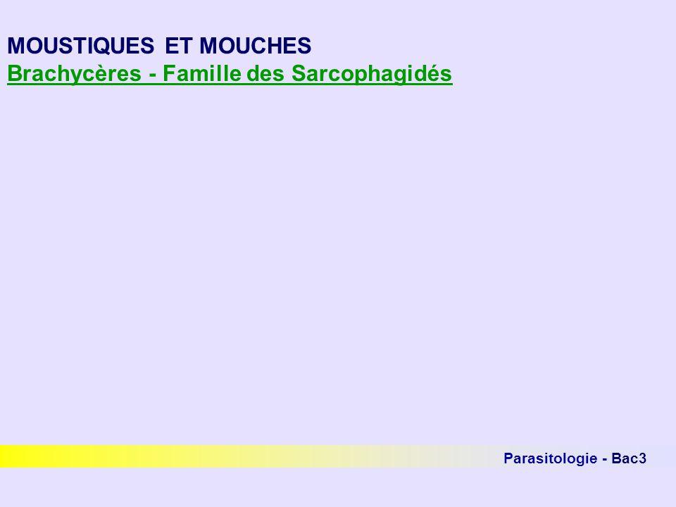 Parasitologie - Bac3 MOUSTIQUES ET MOUCHES Brachycères - Famille des Sarcophagidés