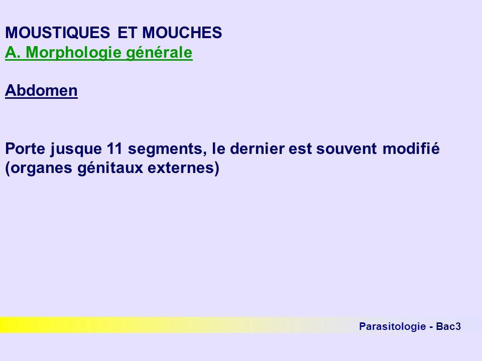 MOUSTIQUES ET MOUCHES A. Morphologie générale Abdomen Porte jusque 11 segments, le dernier est souvent modifié (organes génitaux externes)