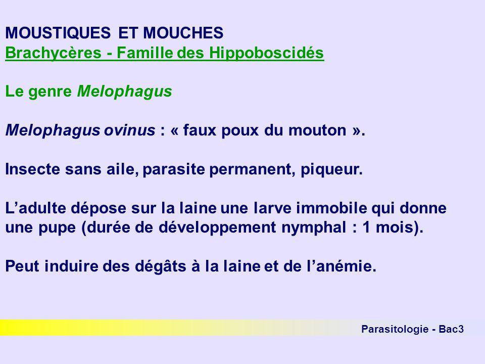 Parasitologie - Bac3 MOUSTIQUES ET MOUCHES Brachycères - Famille des Hippoboscidés Le genre Melophagus Melophagus ovinus : « faux poux du mouton ». In