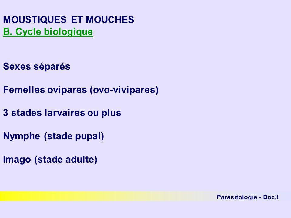 Parasitologie - Bac3 MOUSTIQUES ET MOUCHES Lordre des diptères - 1 paire dailes et 1 paire dhaltères - importants parasites externes ou agents de myiases - 3 sous-ordres :Nématocères Brachycères orthorrhaphes Brachycères cyclorrhaphes
