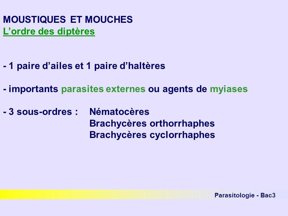 Parasitologie - Bac3 MOUSTIQUES ET MOUCHES Nématocères - famille des Culicidés (les moustiques) Nuisance directe :papules prurigineuses suite à linjection de salive indirecte : rôle vectoriel