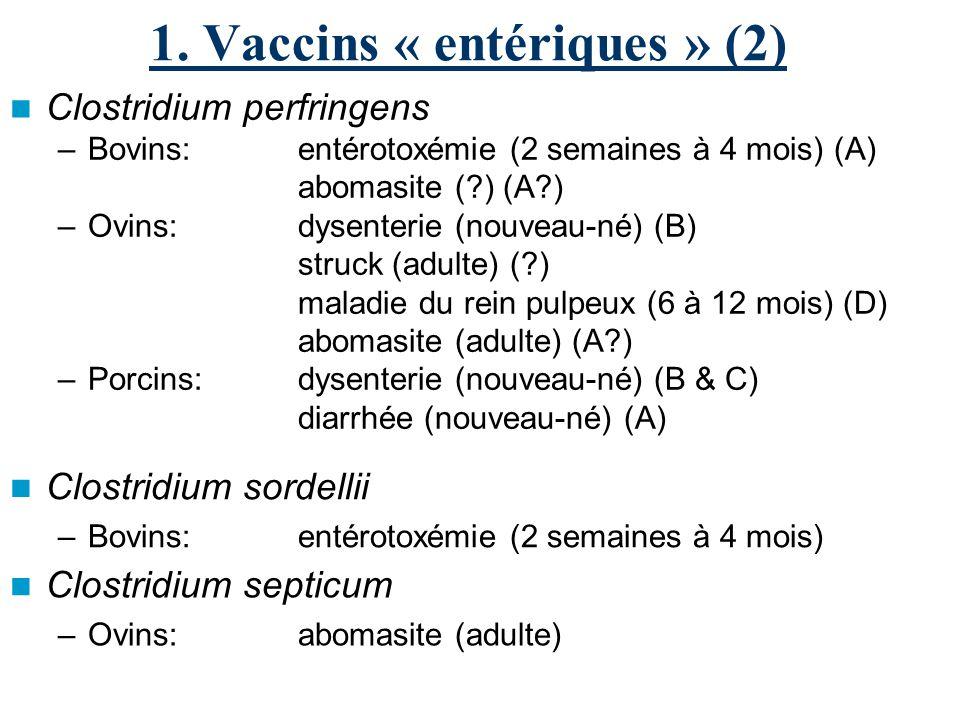 1. Vaccins « entériques » (2) Clostridium perfringens –Bovins:entérotoxémie (2 semaines à 4 mois) (A) abomasite (?) (A?) –Ovins:dysenterie (nouveau-né