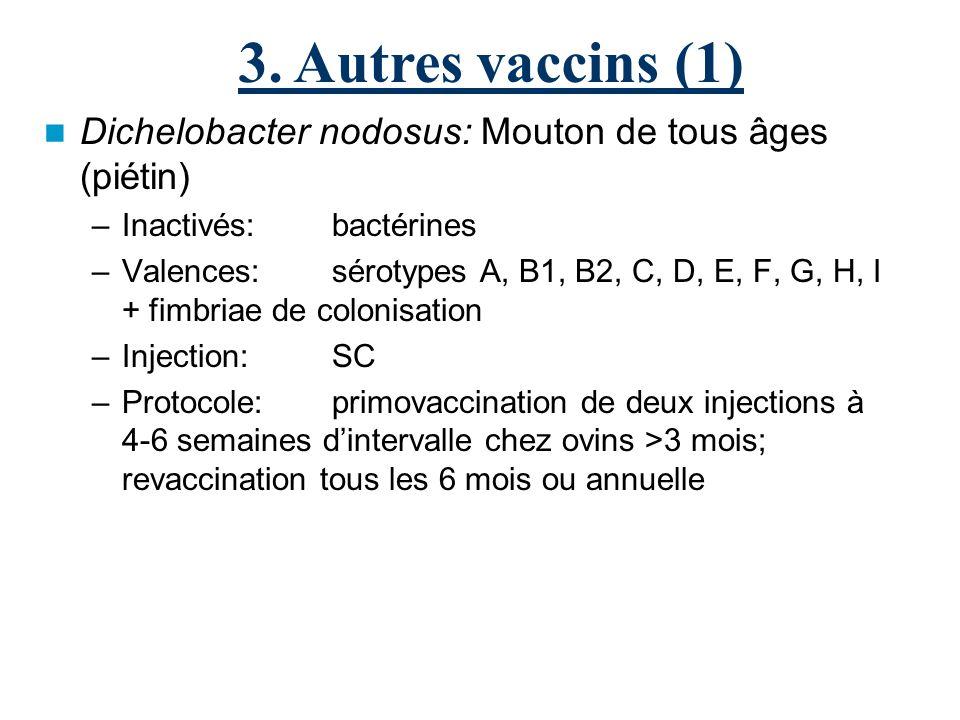 Dichelobacter nodosus: Mouton de tous âges (piétin) –Inactivés:bactérines –Valences:sérotypes A, B1, B2, C, D, E, F, G, H, I + fimbriae de colonisation –Injection:SC –Protocole: primovaccination de deux injections à 4-6 semaines dintervalle chez ovins >3 mois; revaccination tous les 6 mois ou annuelle 3.