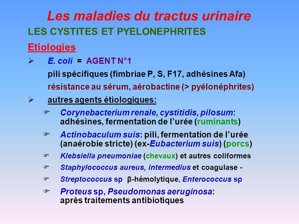 Les maladies du tractus urinaire LES CYSTITES ET PYELONEPHRITES Etiologies E.