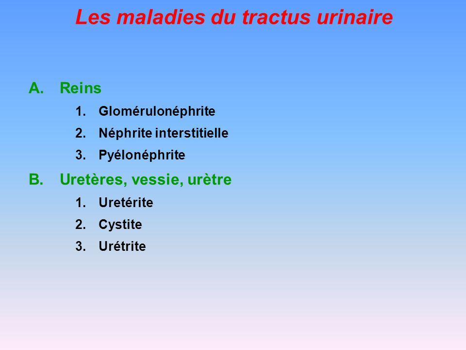 Les maladies du tractus urinaire LEPTOSPIROSE Traitement pénicilline G/streptomycine, tétracyclines: au moins pendant 10 jours .