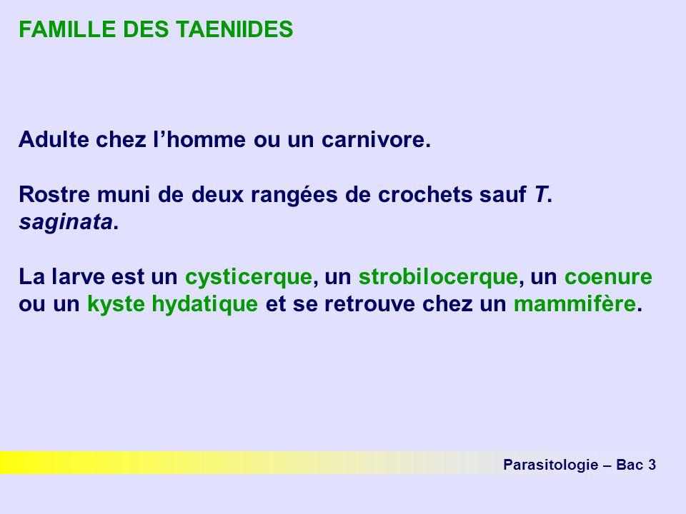 FAMILLE DES TAENIIDES Adulte chez lhomme ou un carnivore. Rostre muni de deux rangées de crochets sauf T. saginata. La larve est un cysticerque, un st