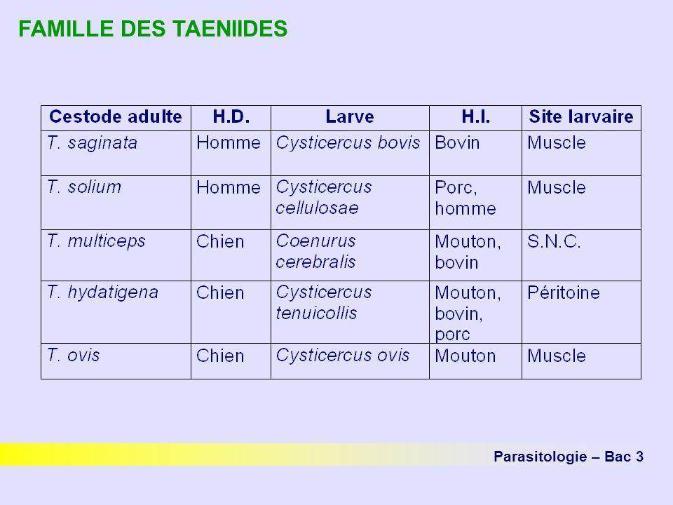 FAMILLE DES TAENIIDES Parasitologie – Bac 3