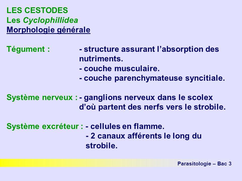 LES CESTODES Les Cyclophillidea Morphologie générale Tégument :- structure assurant labsorption des nutriments. - couche musculaire. - couche parenchy