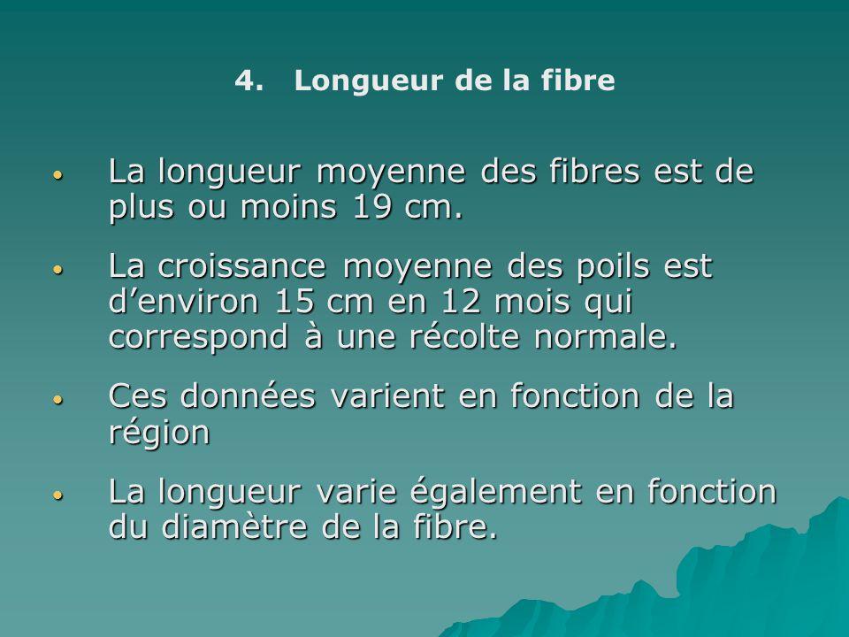 4. Longueur de la fibre La longueur moyenne des fibres est de plus ou moins 19 cm. La longueur moyenne des fibres est de plus ou moins 19 cm. La crois
