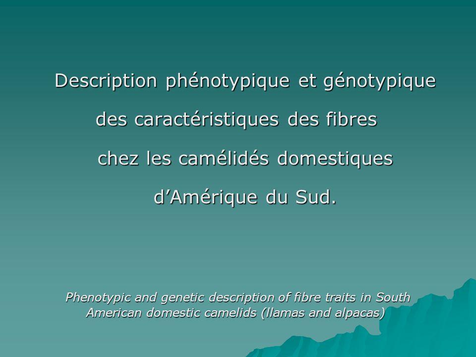 Description phénotypique et génotypique des caractéristiques des fibres chez les camélidés domestiques dAmérique du Sud. Phenotypic and genetic descri