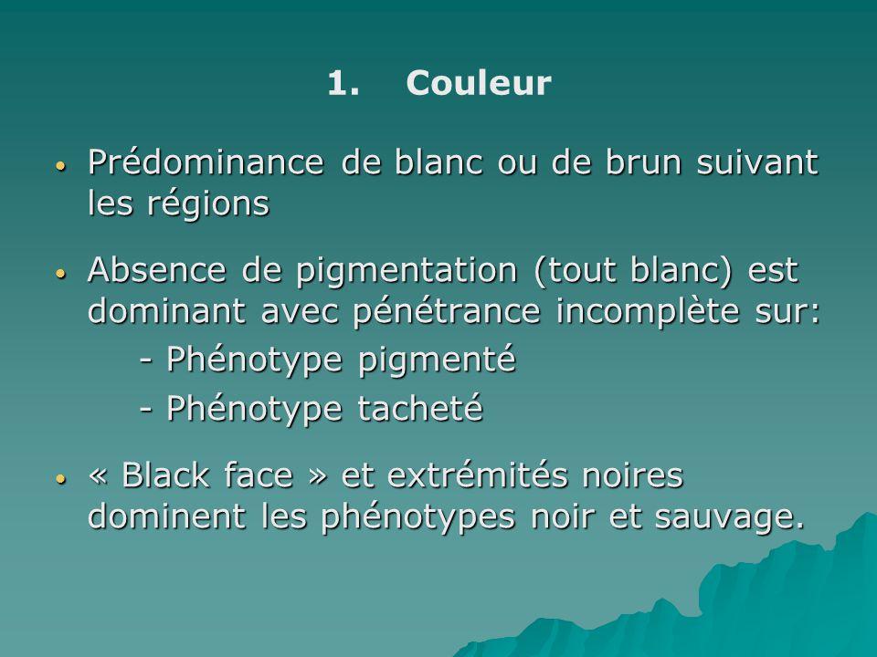 1. 1.Couleur Prédominance de blanc ou de brun suivant les régions Prédominance de blanc ou de brun suivant les régions Absence de pigmentation (tout b