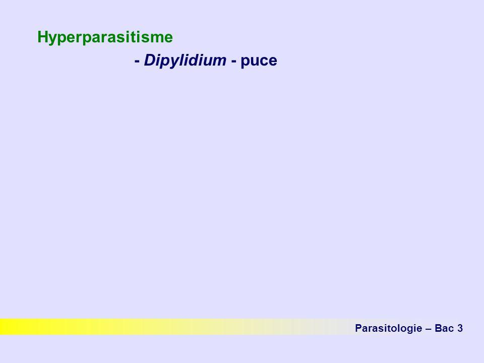 Hyperparasitisme - Dipylidium - puce Parasitologie – Bac 3