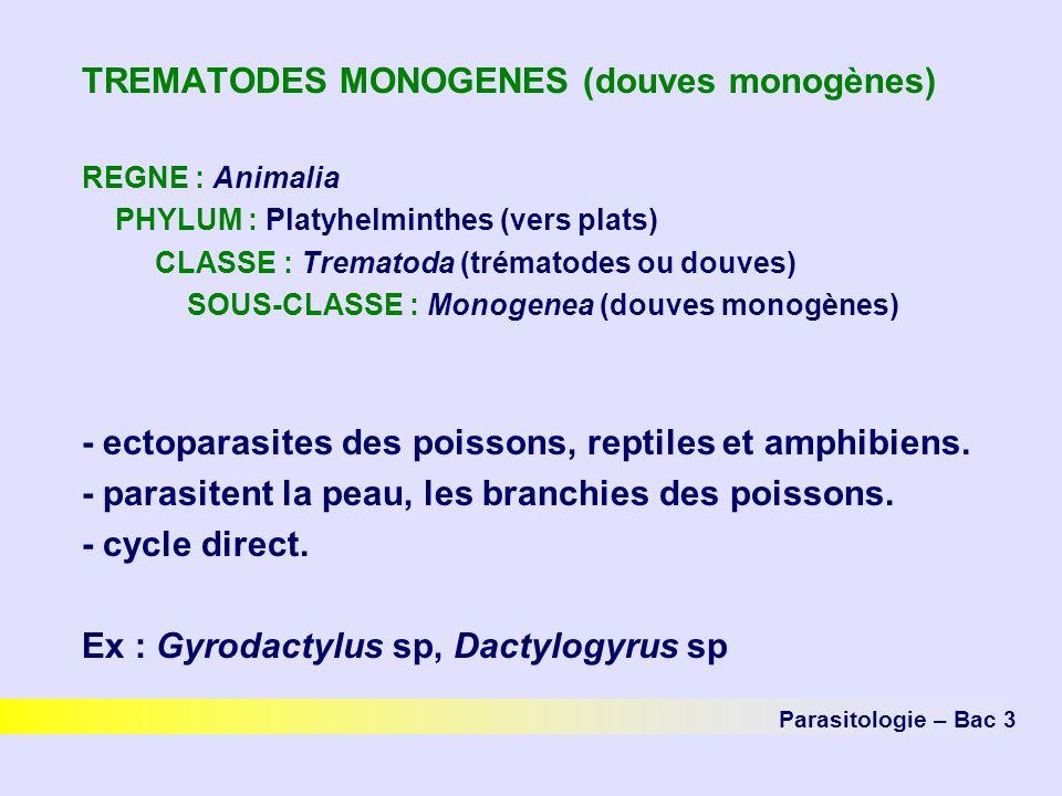 TREMATODES MONOGENES (douves monogènes) REGNE : Animalia PHYLUM : Platyhelminthes (vers plats) CLASSE : Trematoda (trématodes ou douves) SOUS-CLASSE :