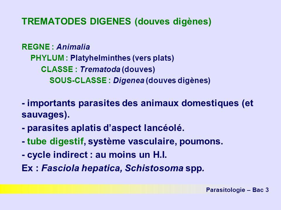 TREMATODES DIGENES (douves digènes) REGNE : Animalia PHYLUM : Platyhelminthes (vers plats) CLASSE : Trematoda (douves) SOUS-CLASSE : Digenea (douves d
