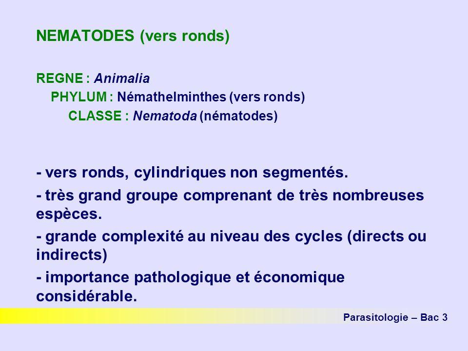 NEMATODES (vers ronds) REGNE : Animalia PHYLUM : Némathelminthes (vers ronds) CLASSE : Nematoda (nématodes) - vers ronds, cylindriques non segmentés.