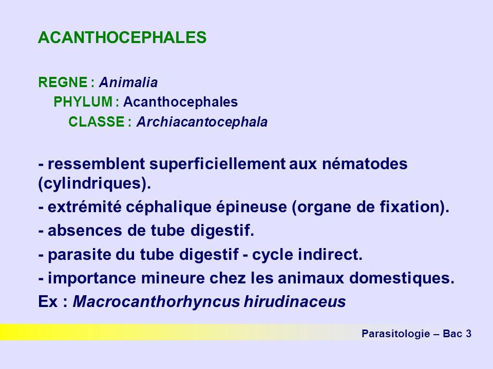ACANTHOCEPHALES REGNE : Animalia PHYLUM : Acanthocephales CLASSE : Archiacantocephala - ressemblent superficiellement aux nématodes (cylindriques). -