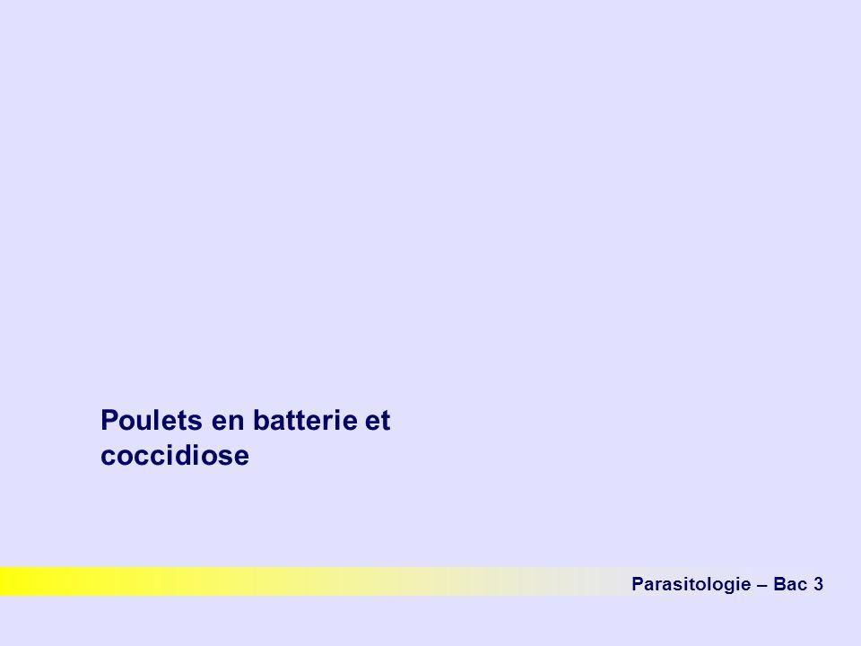 Poulets en batterie et coccidiose