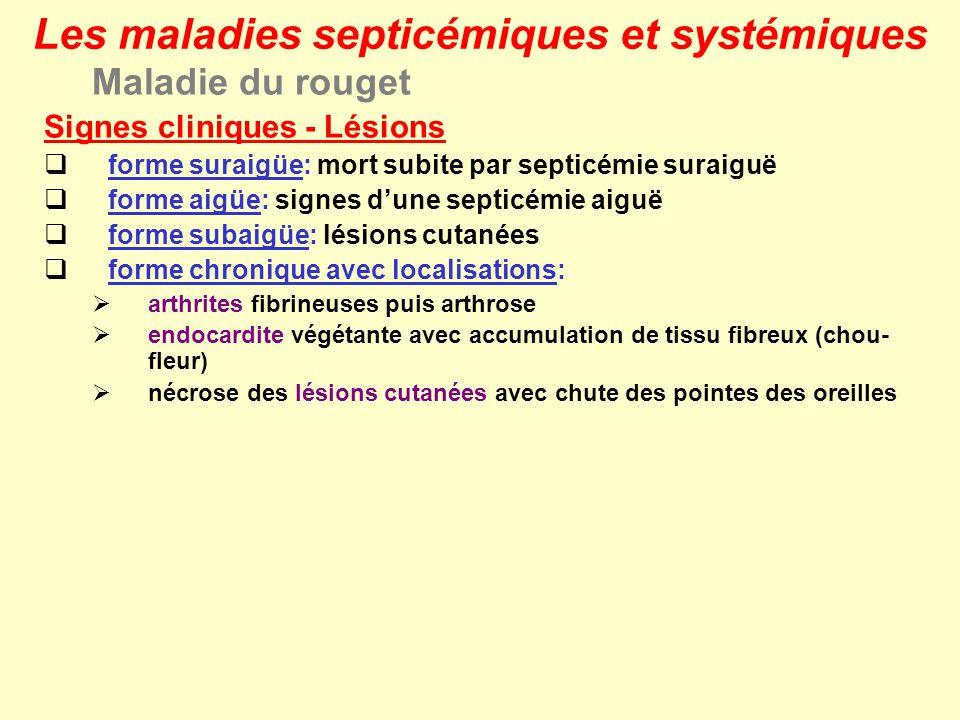Maladie du rouget Signes cliniques - Lésions forme suraigüe: mort subite par septicémie suraiguë forme aigüe: signes dune septicémie aiguë forme subai