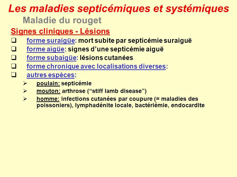 Les maladies septicémiques et systémiques Maladie du rouget Signes cliniques - Lésions forme suraigüe: mort subite par septicémie suraiguë forme aigüe