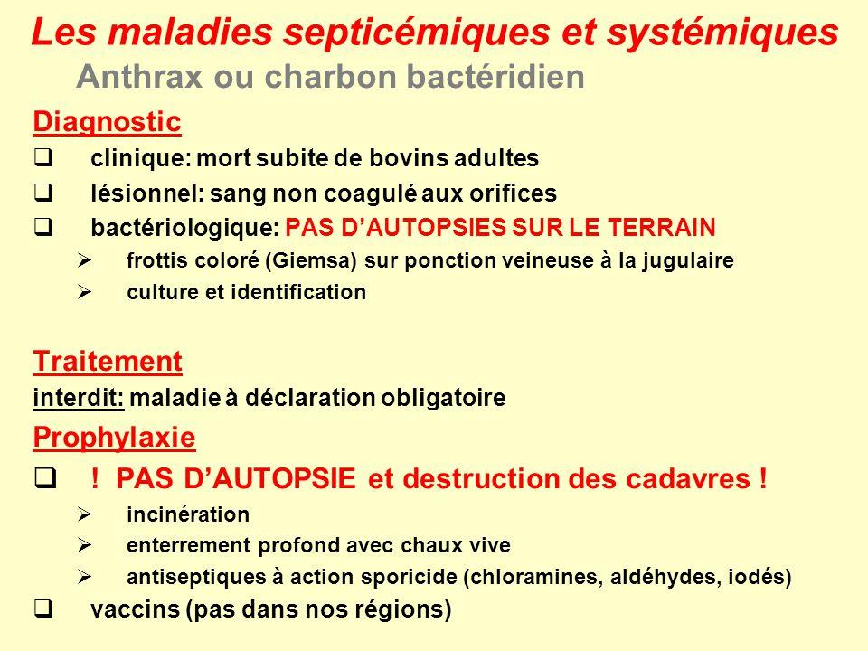 Anthrax ou charbon bactéridien Diagnostic clinique: mort subite de bovins adultes lésionnel: sang non coagulé aux orifices bactériologique: PAS DAUTOP