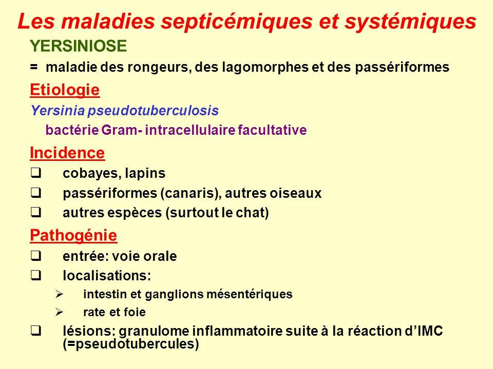 YERSINIOSE = maladie des rongeurs, des lagomorphes et des passériformes Etiologie Yersinia pseudotuberculosis bactérie Gram- intracellulaire facultati