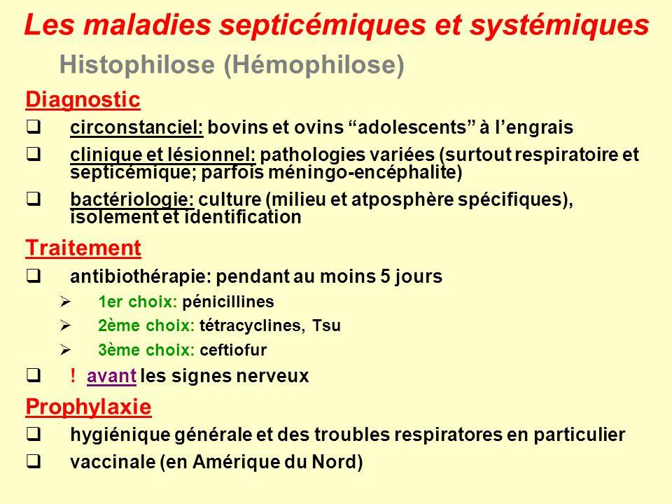 Histophilose (Hémophilose) Diagnostic circonstanciel: bovins et ovins adolescents à lengrais clinique et lésionnel: pathologies variées (surtout respi