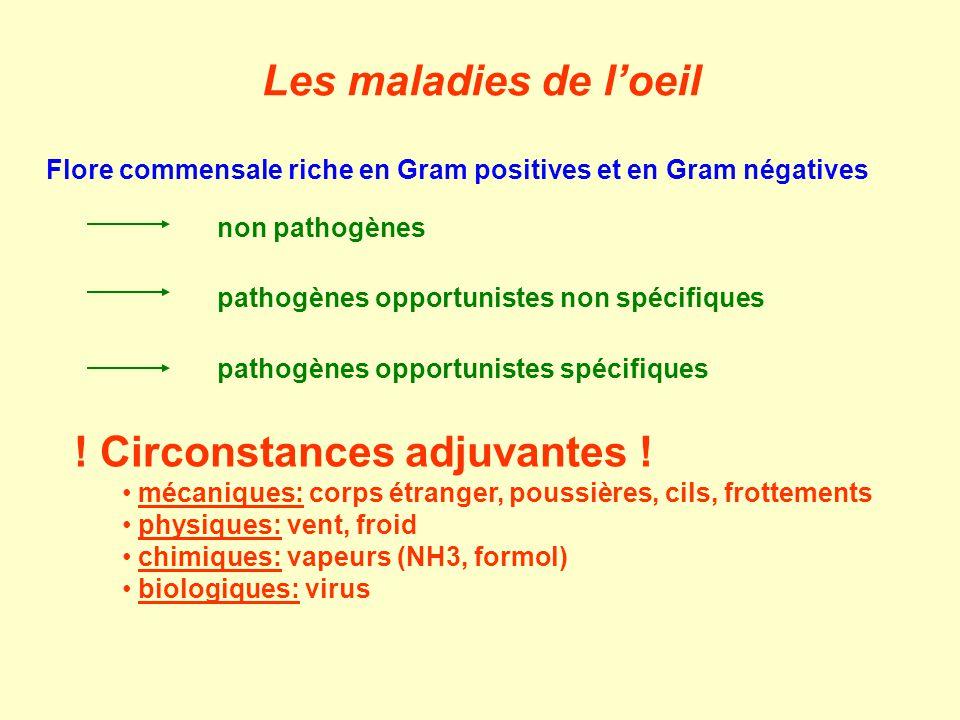 A.Conjonctivites et kératites 1.Infections secondaires banales 2.Infections à mycoplasmes/chlamydies 3.Infections à moraxelles B.Autres 1.Uvéites 2.Irido-cyclites