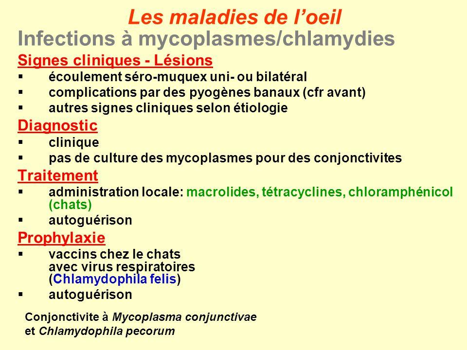 A.Conjonctivites et kératites Infections à moraxelles Etiologies Moraxella bovis & Moraxella (Branhamella) ovis: coccobacilles Gram- causes favorisantes mécaniques: poussières, mouches physiques: courant dair chimiques: polluants irritants biologiques: mycoplasmes, uréaplasmes, rickettsies, chlamydies (Mycoplasma conjunctivae + Chlamydophila pecorum) Incidence surtout jeune bétail (< 2 ans) en feedlot ou en pâture ou à lintérieur moutons jeunes et adultes en troupeau Les maladies de loeil