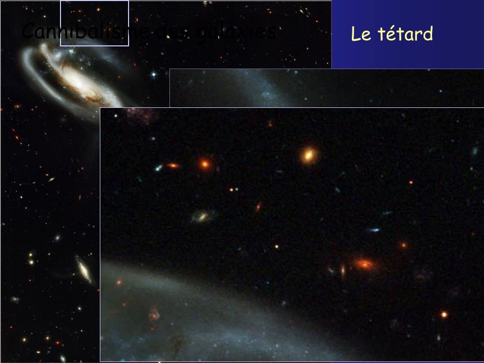 The Tadpole Galaxy Cannibalisme des galaxies Le tétard