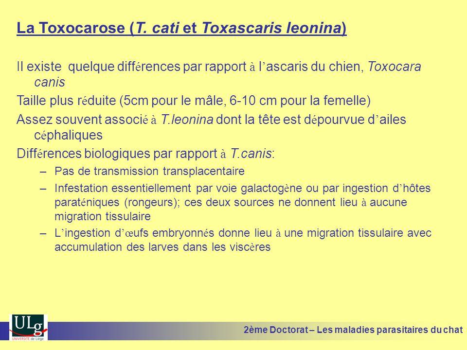 La Toxocarose (T. cati et Toxascaris leonina) Il existe quelque diff é rences par rapport à l ascaris du chien, Toxocara canis Taille plus r é duite (