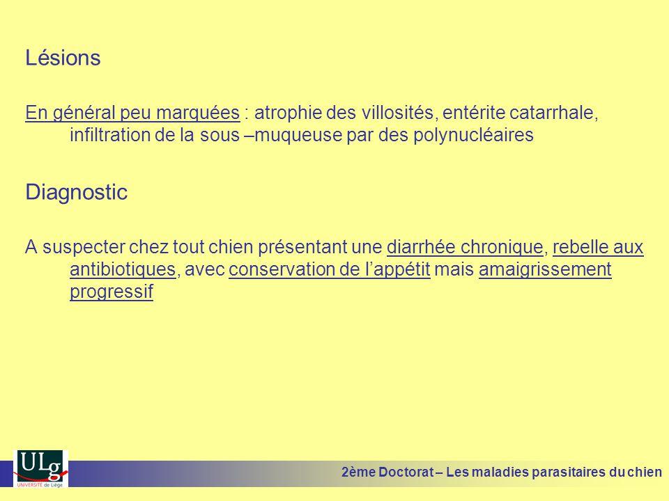 Lésions En général peu marquées : atrophie des villosités, entérite catarrhale, infiltration de la sous –muqueuse par des polynucléaires Diagnostic A