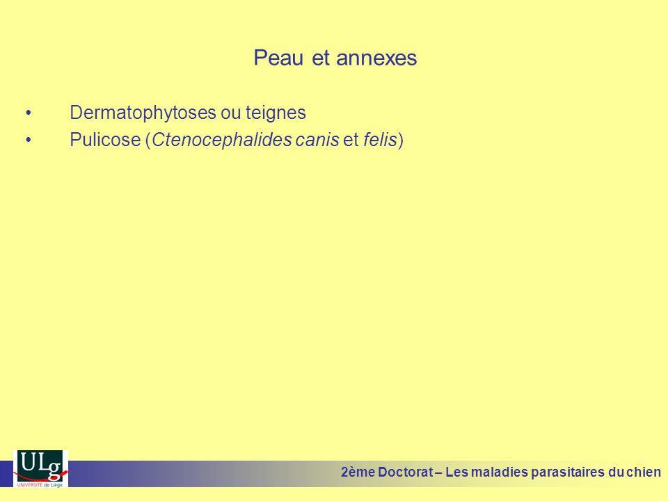 Peau et annexes Dermatophytoses ou teignes Pulicose (Ctenocephalides canis et felis) 2ème Doctorat – Les maladies parasitaires du chien