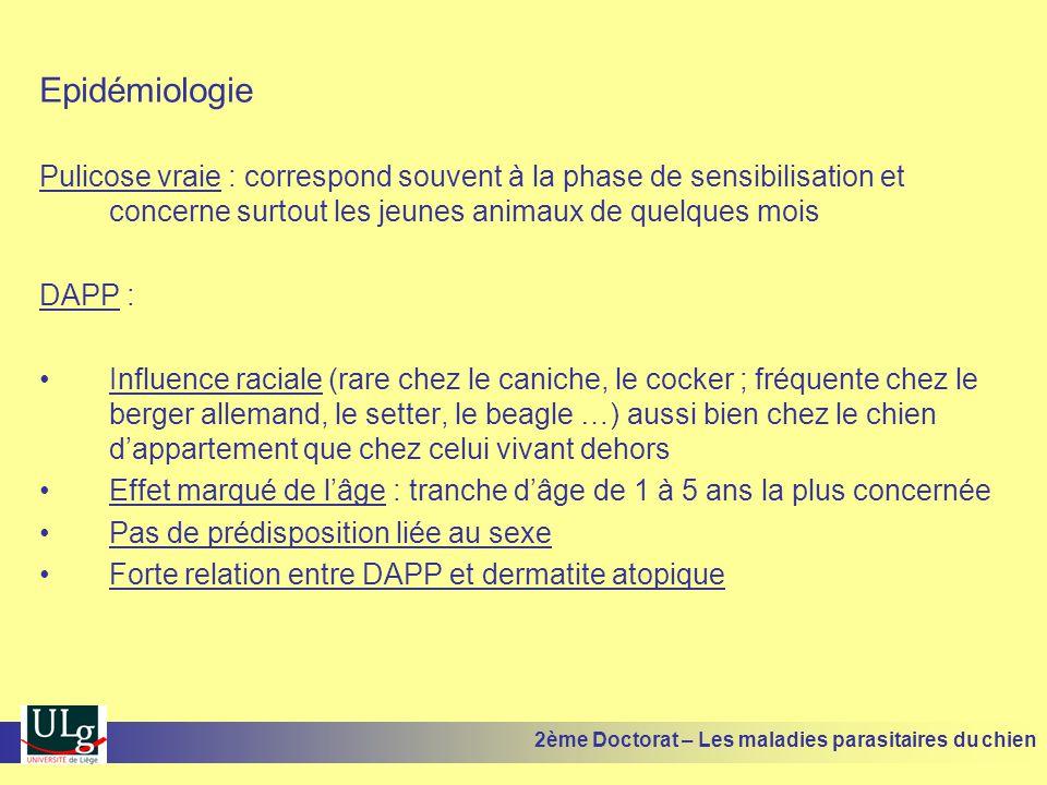 Epidémiologie Pulicose vraie : correspond souvent à la phase de sensibilisation et concerne surtout les jeunes animaux de quelques mois DAPP : Influen