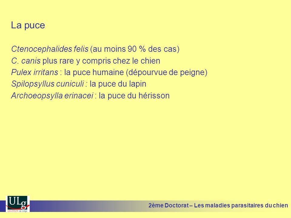 La puce Ctenocephalides felis (au moins 90 % des cas) C.