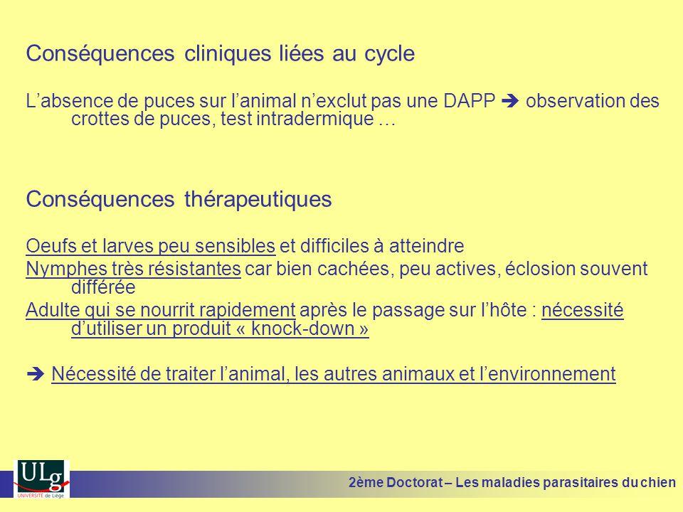 Conséquences cliniques liées au cycle Labsence de puces sur lanimal nexclut pas une DAPP observation des crottes de puces, test intradermique … Conséq