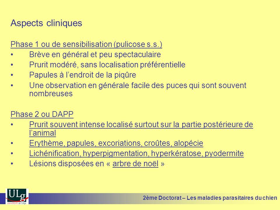 Aspects cliniques Phase 1 ou de sensibilisation (pulicose s.s.) Brève en général et peu spectaculaire Prurit modéré, sans localisation préférentielle