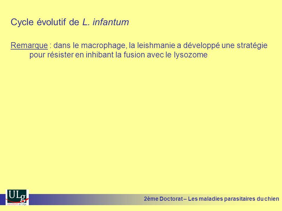 Cycle évolutif de L. infantum Remarque : dans le macrophage, la leishmanie a développé une stratégie pour résister en inhibant la fusion avec le lysoz
