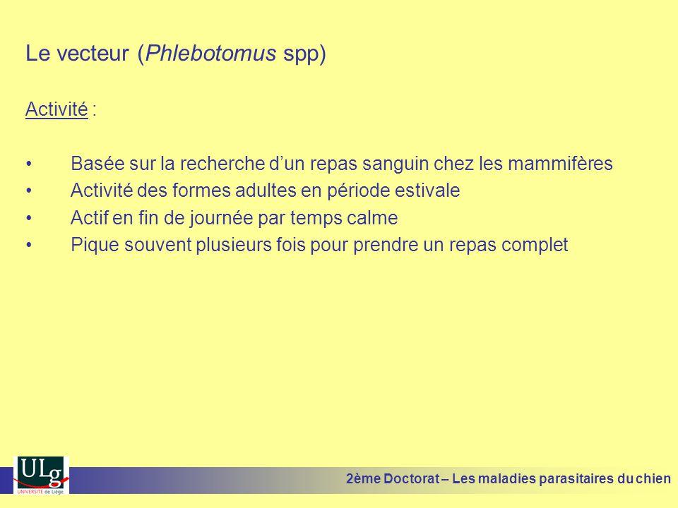 Le vecteur (Phlebotomus spp) Activité : Basée sur la recherche dun repas sanguin chez les mammifères Activité des formes adultes en période estivale A