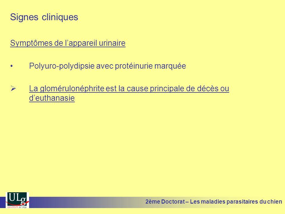 Signes cliniques Symptômes de lappareil urinaire Polyuro-polydipsie avec protéinurie marquée La glomérulonéphrite est la cause principale de décès ou deuthanasie 2ème Doctorat – Les maladies parasitaires du chien