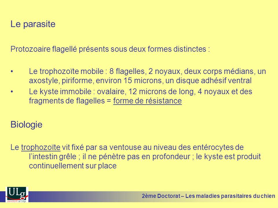 Le parasite Protozoaire flagellé présents sous deux formes distinctes : Le trophozoïte mobile : 8 flagelles, 2 noyaux, deux corps médians, un axostyle, piriforme, environ 15 microns, un disque adhésif ventral Le kyste immobile : ovalaire, 12 microns de long, 4 noyaux et des fragments de flagelles = forme de résistance Biologie Le trophozoïte vit fixé par sa ventouse au niveau des entérocytes de lintestin grêle ; il ne pénètre pas en profondeur ; le kyste est produit continuellement sur place 2ème Doctorat – Les maladies parasitaires du chien