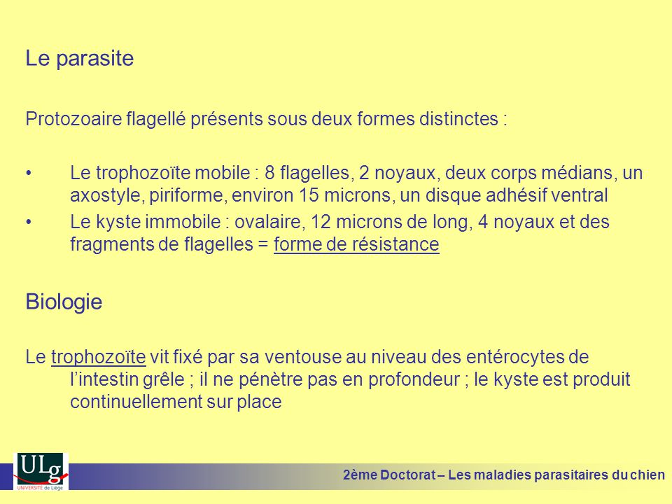 Bioalléthrine PerméthrineDefendog Spray Pulvex Spot DeltaméthrineScalibor Collier 2ème Doctorat – Les maladies parasitaires du chien