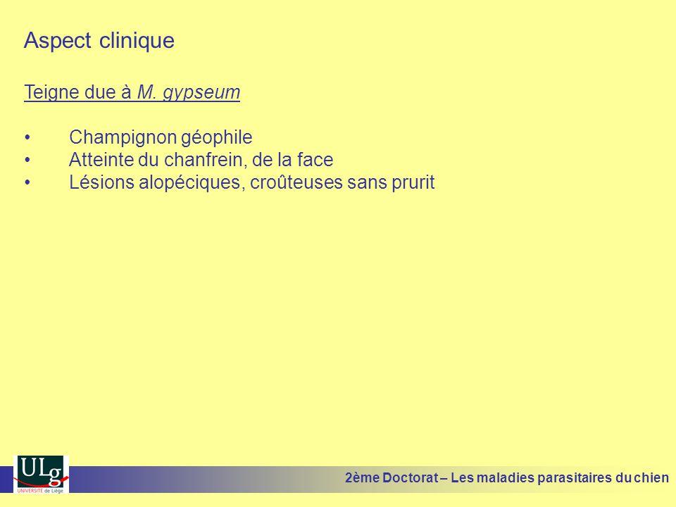 Aspect clinique Teigne due à M. gypseum Champignon géophile Atteinte du chanfrein, de la face Lésions alopéciques, croûteuses sans prurit 2ème Doctora