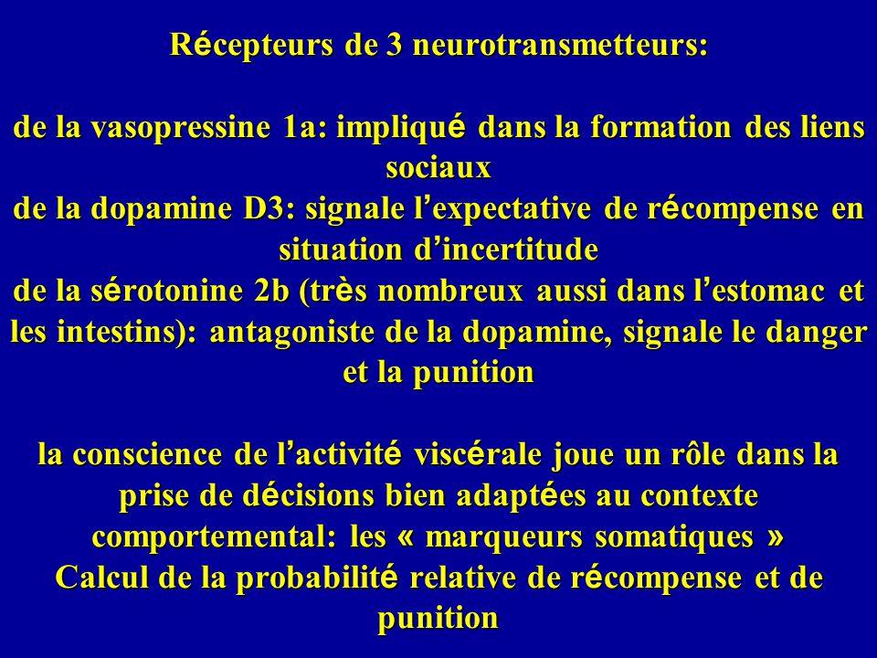 R é cepteurs de 3 neurotransmetteurs: de la vasopressine 1a: impliqu é dans la formation des liens sociaux de la dopamine D3: signale l expectative de r é compense en situation d incertitude de la s é rotonine 2b (tr è s nombreux aussi dans l estomac et les intestins): antagoniste de la dopamine, signale le danger et la punition la conscience de l activit é visc é rale joue un rôle dans la prise de d é cisions bien adapt é es au contexte comportemental: les « marqueurs somatiques » Calcul de la probabilit é relative de r é compense et de punition