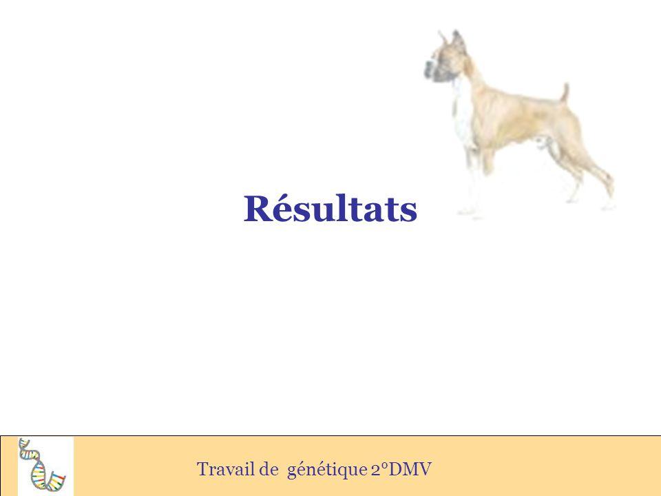 Résultats Travail de génétique 2°DMV
