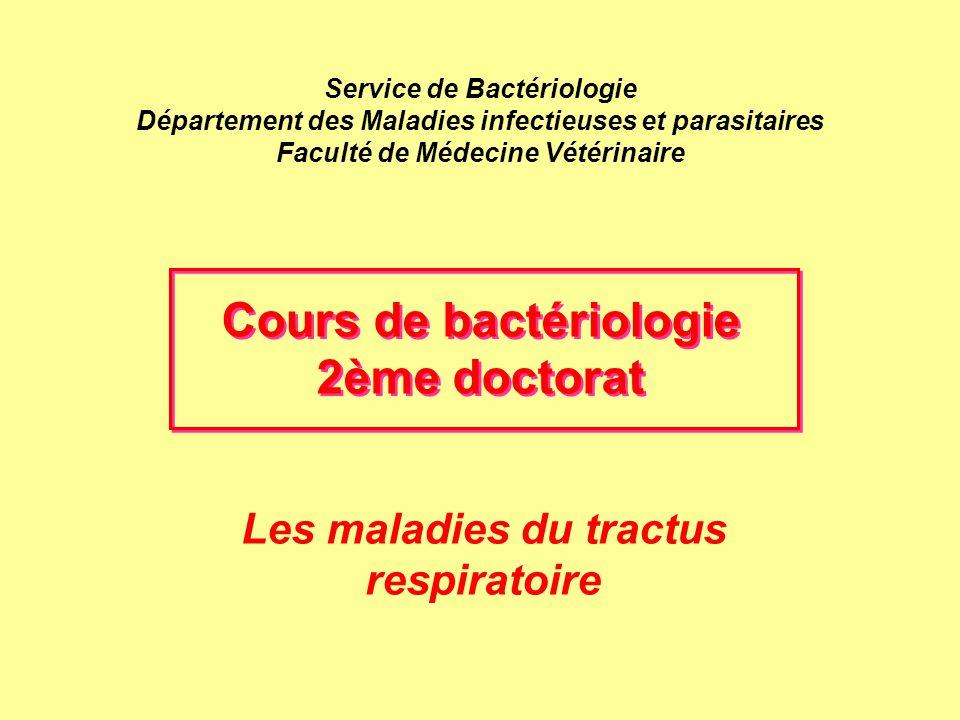 Les maladies du tractus respiratoire PLEUROPNEUMONIE DU PORCELET Lésions - poumons avec lésions classiques (lobes diaphragmatiques) congestion, hémorragies exsudat, oedème infiltration de cellules inflammatoires Hépatisation rouge et grise - pleurésie, péricardite fibrineuses et exsudatives - ganglions bronchiques hémorragiques - lésions chroniques: abcès encapsulés, nodules, adhérences