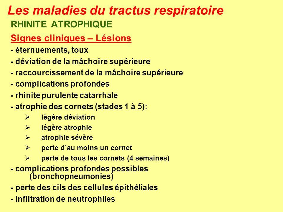 Les maladies du tractus respiratoire RHINITE ATROPHIQUE Signes cliniques – Lésions - éternuements, toux - déviation de la mâchoire supérieure - raccou