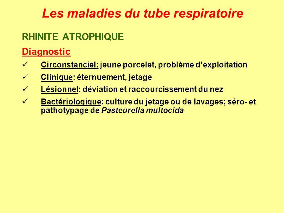 Les maladies du tube respiratoire RHINITE ATROPHIQUE Diagnostic Circonstanciel: jeune porcelet, problème dexploitation Clinique: éternuement, jetage L