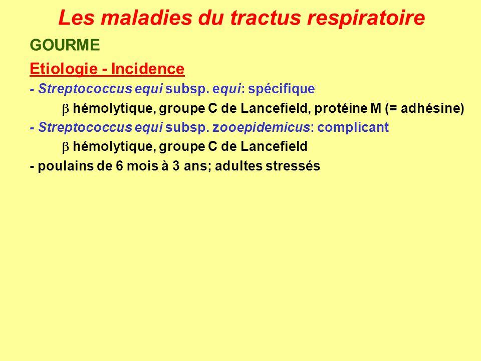 Les maladies du tractus respiratoire GOURME Etiologie - Incidence - Streptococcus equi subsp. equi: spécifique hémolytique, groupe C de Lancefield, pr