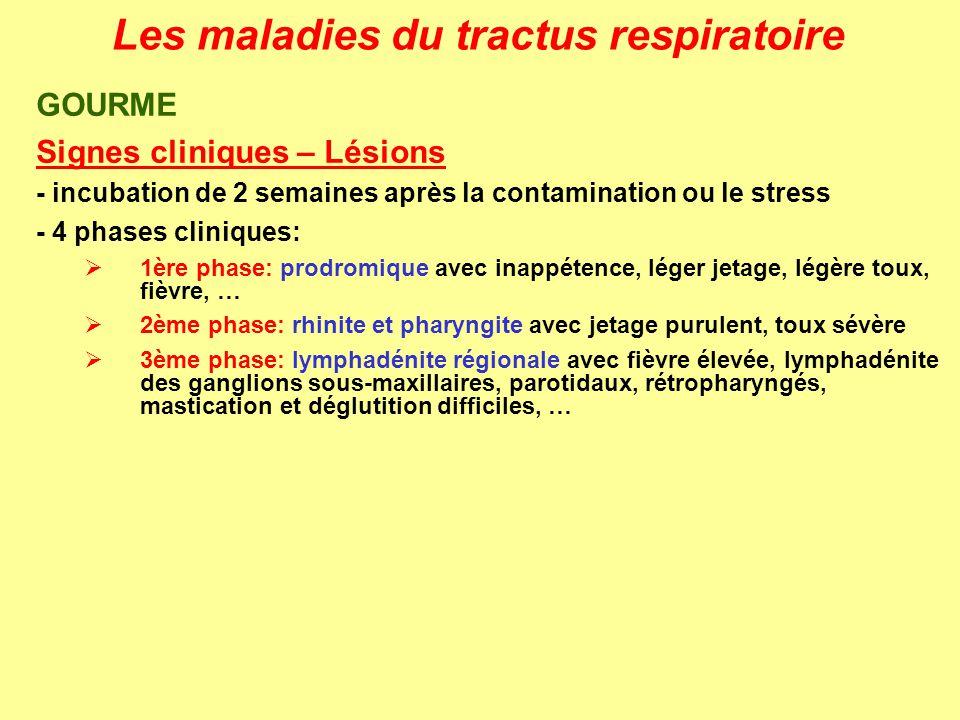 Les maladies du tractus respiratoire GOURME Signes cliniques – Lésions - incubation de 2 semaines après la contamination ou le stress - 4 phases clini