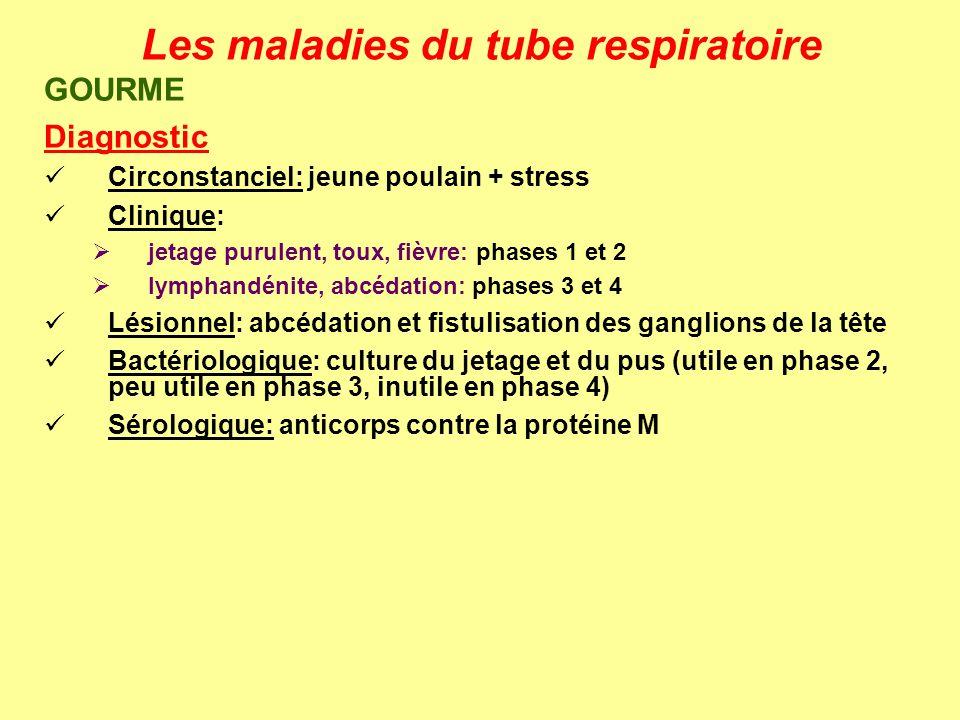 Les maladies du tube respiratoire GOURME Diagnostic Circonstanciel: jeune poulain + stress Clinique: jetage purulent, toux, fièvre: phases 1 et 2 lymp